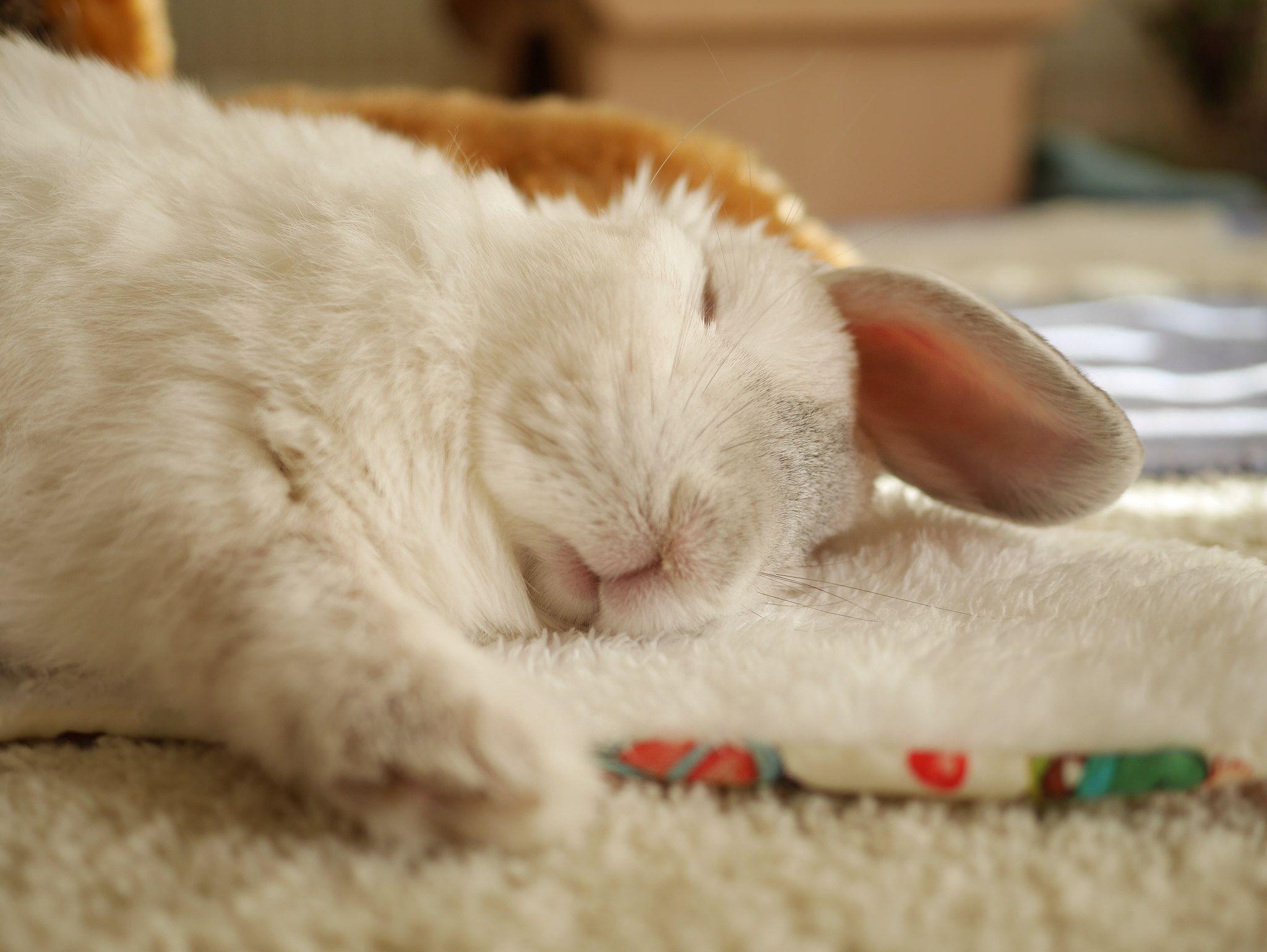 москве зайчик спят картинки также большую поясничную