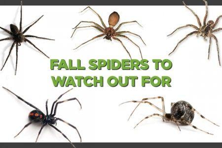 Spiders in iowa infographic spider identification chart also home bugs rh pinterest