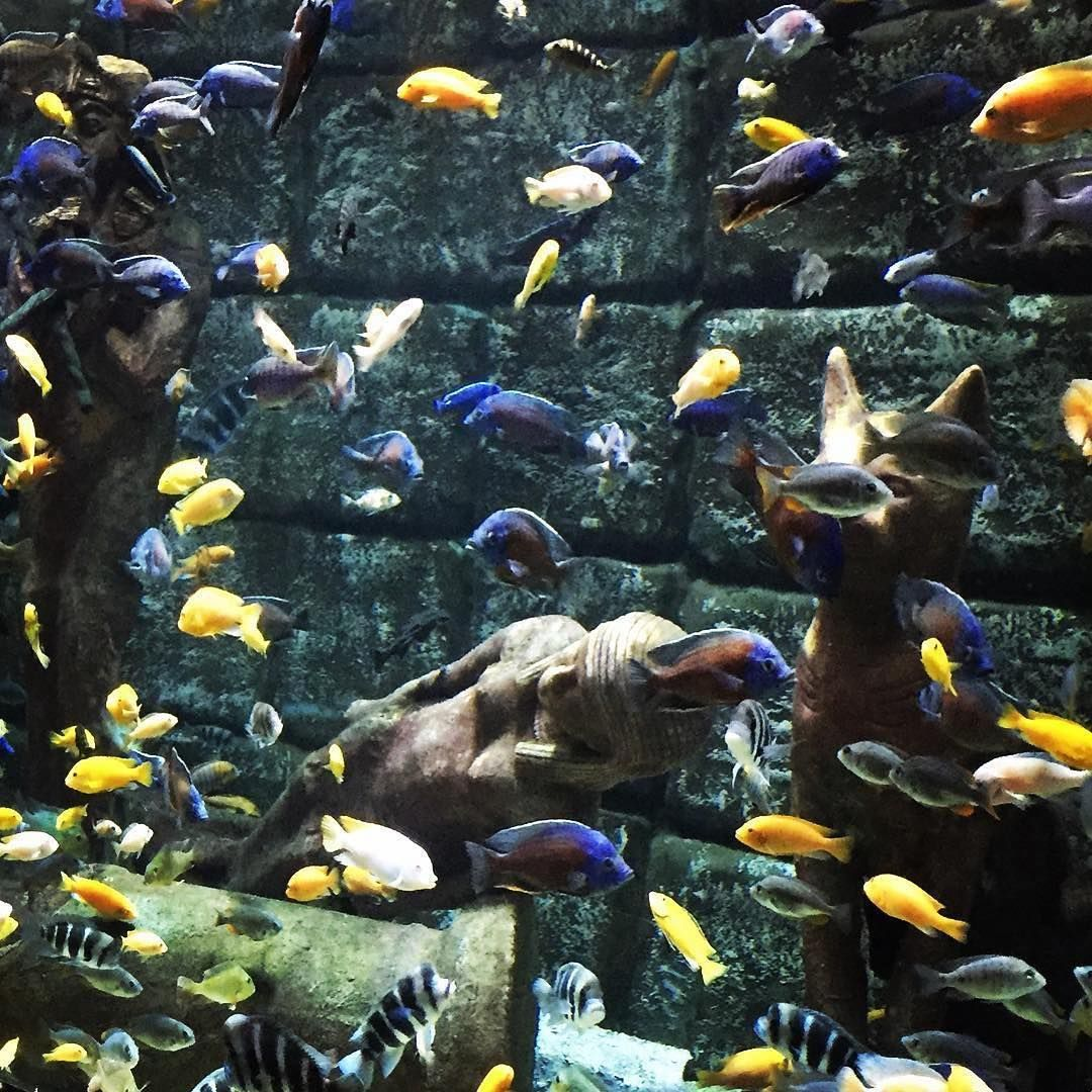 Viele bunte Fische im Aquarium in Antalya ���� Many colorful fishes in the aquarium of Antalya #antalyaaquarium #antalya #aquarium #travelphotos #travel #fishes #fische #reise #ausflüge #türkeireise #reisen #ausflug #travelphotography #traveltips http://tipsrazzi.com/ipost/1500016501297918239/?code=BTRIQ99FjEf