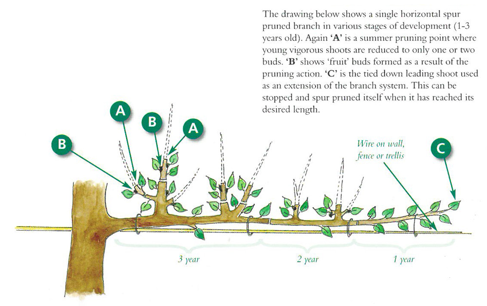 Al Shape That Involves Tying Back Of Shoots And A Lighter