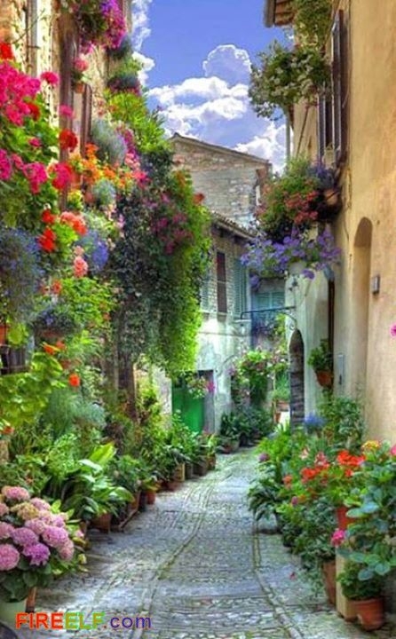 Verona, Italy.. Such a beautiful lane..!