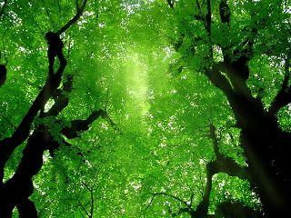 Olisipa pihassa puita...