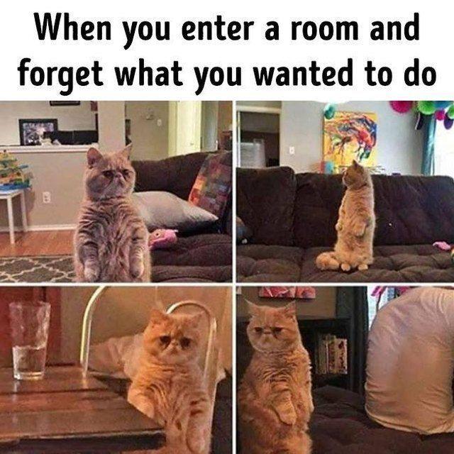 19 Super Relatable Cat Memes   CutesyPooh #prettypics