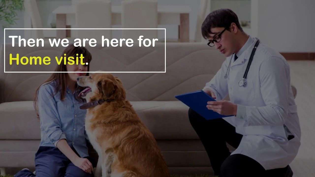 Choose The Best Mobile Vet Clinic In Atlanta Ask The Vet Is A Well Known Pet Care Clinic That Provides All Pet Care Services By Th Mobile Vet Vet Clinics Vets