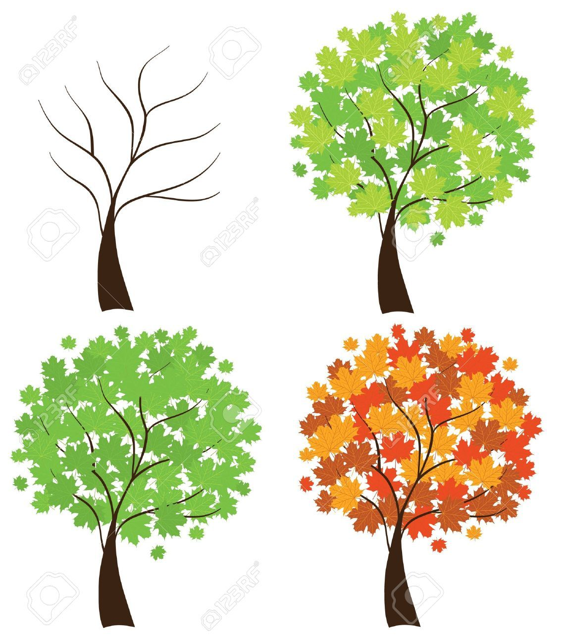 Trees in Different Seasons Four Season Maple Trees Tree | Hand ...