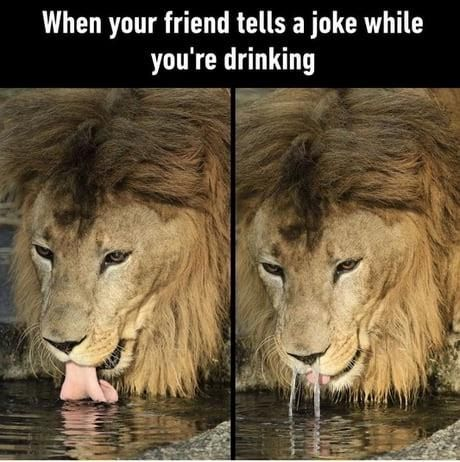 45 Funny Memes Of The Day To Make Your Laugh Really Funny Memes Crazy Funny Memes Stupid Funny Memes