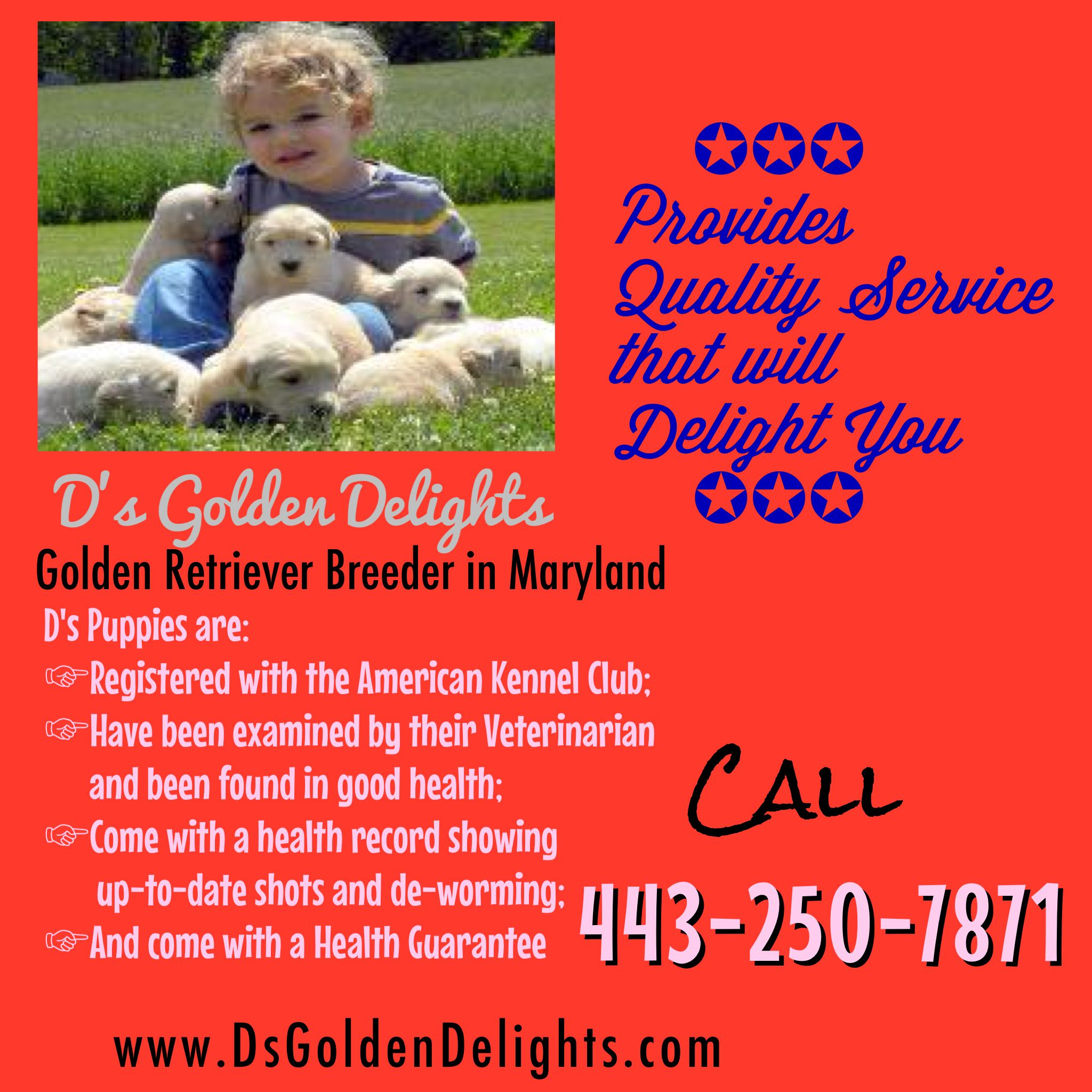 Adorable, Affordable Golden Retriever Puppies in Maryland
