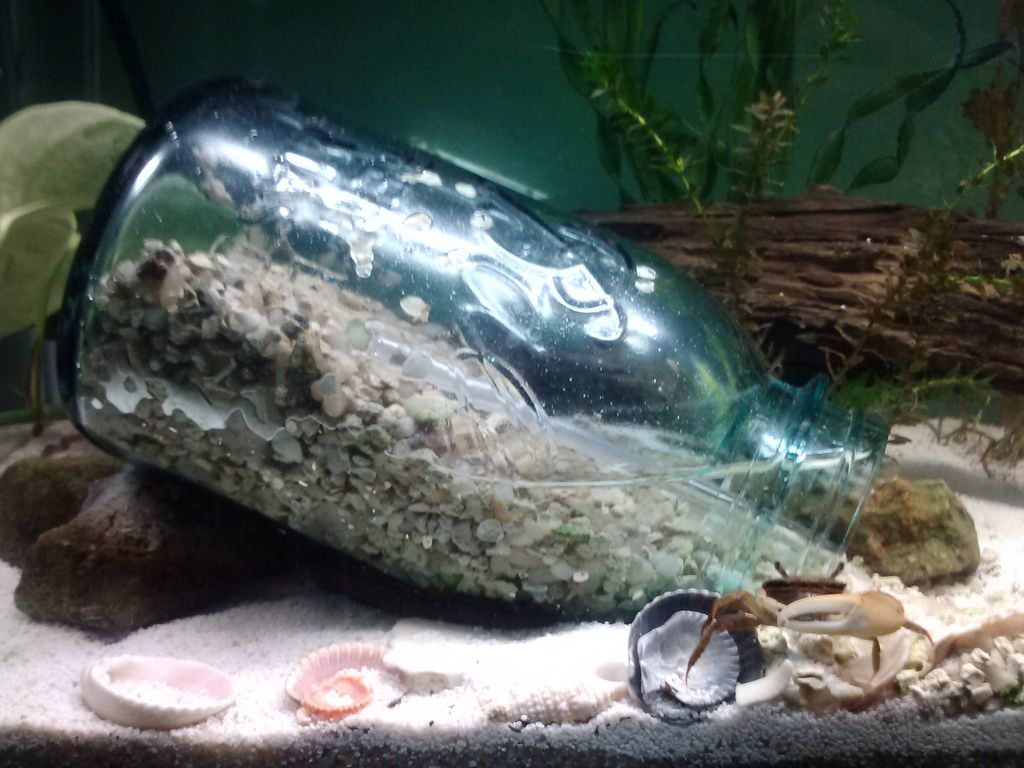 Homemade Underwater Dry Space For Fiddler Crab Fish
