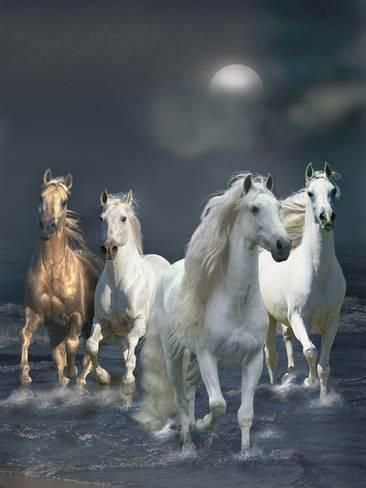 Photographic Print: Dream Horses 020 by Bob Langrish : 24x18in