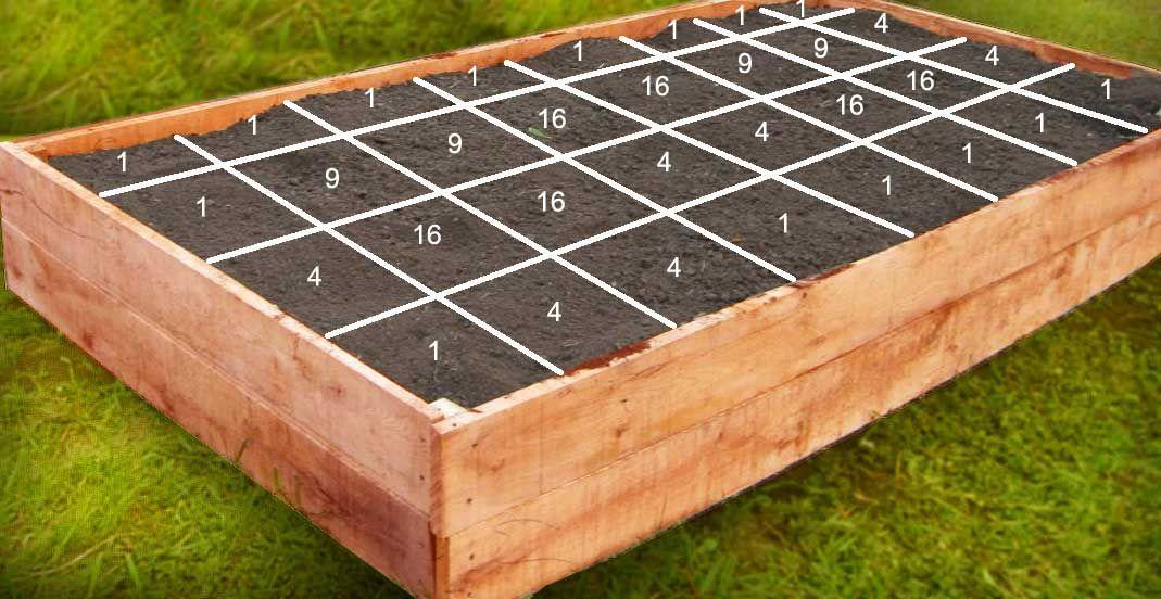 Garden Above Ground Above Ground Garden Boxes Vegetable 400 x 300