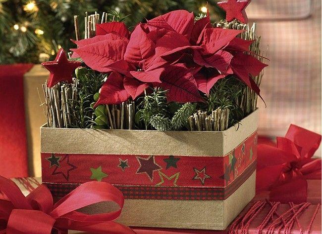 cr er une composition de poinsettias pour les f tes plantes d 39 int rieur pinterest noel la. Black Bedroom Furniture Sets. Home Design Ideas