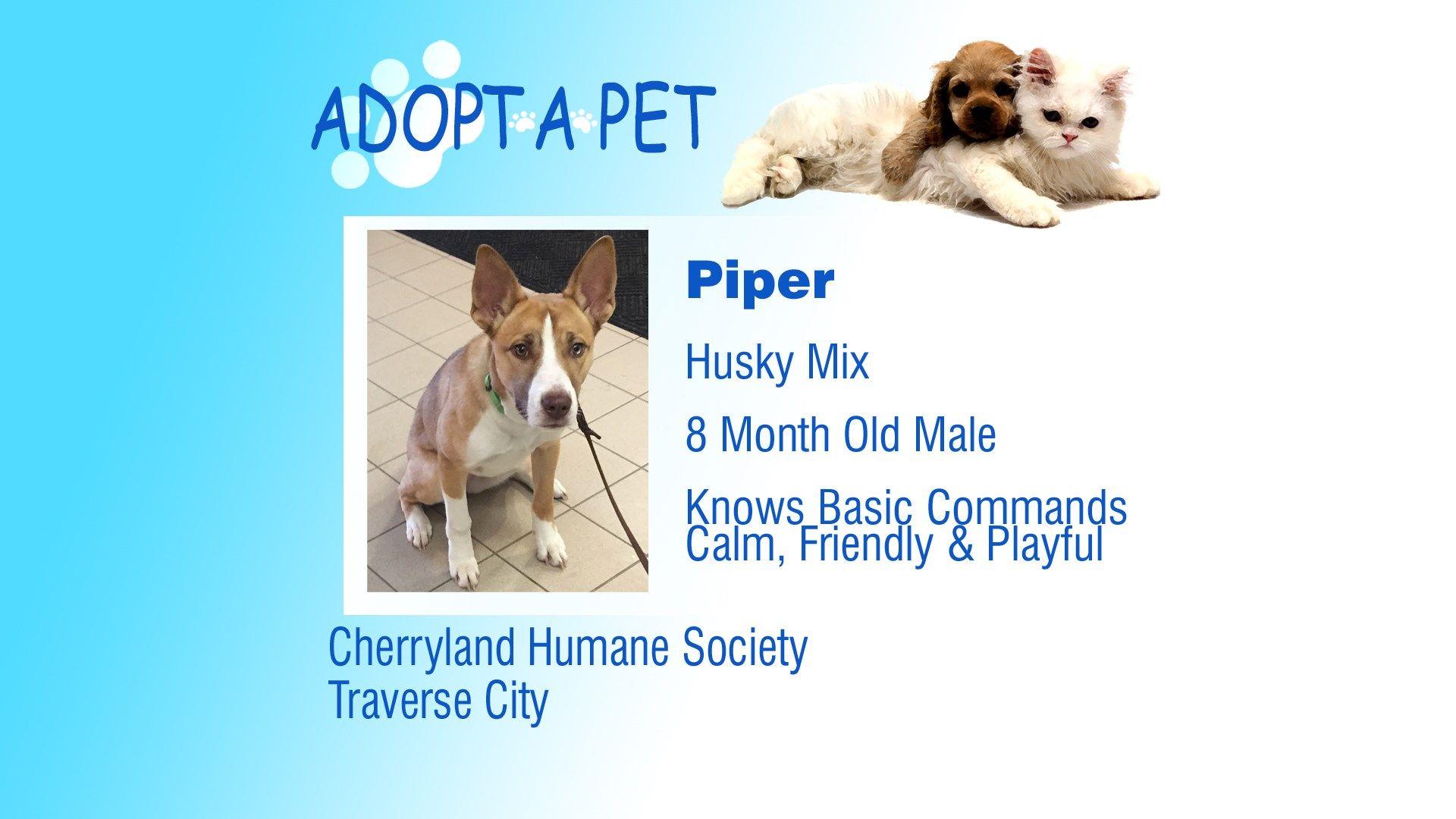 Adopt a Pet Tuesday Piper, Dodger, Ophelia Pets