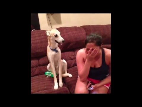 Funny Dogs Video Compilation 2015 Youtube Dog Gifs Funny Dogs