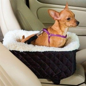 Cómo educar a un cachorro a viajar en coche