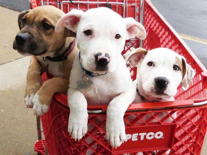 Pin von Michelle Munoz auf Pit Bulls Hunde, Einkaufen