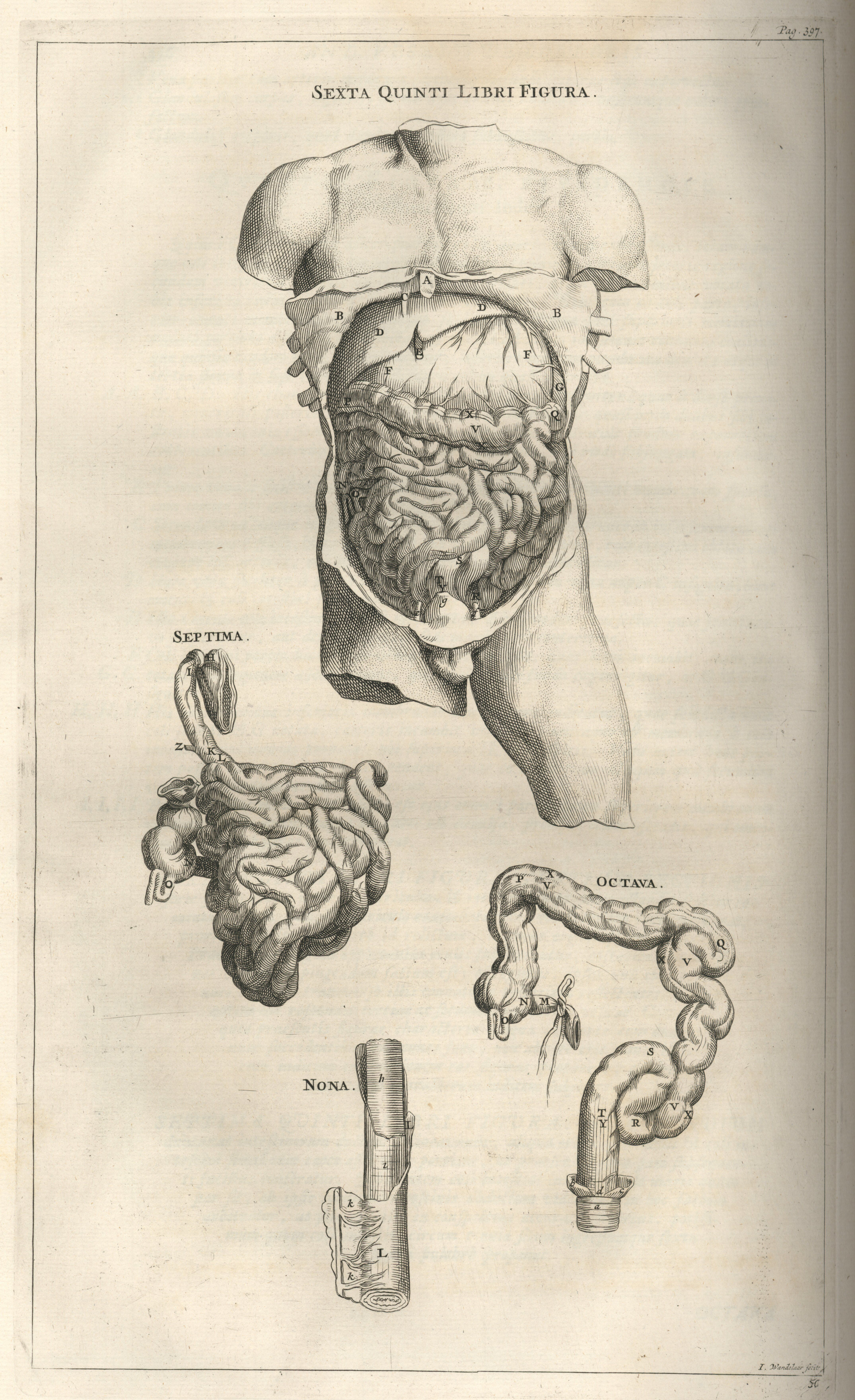 andreas vesalius and anatomy essay Read this full essay on andreas vesalius and anatomy andreas vesalius is  perhaps one of the first and greatest anatomists he set a great amount of the  fram.