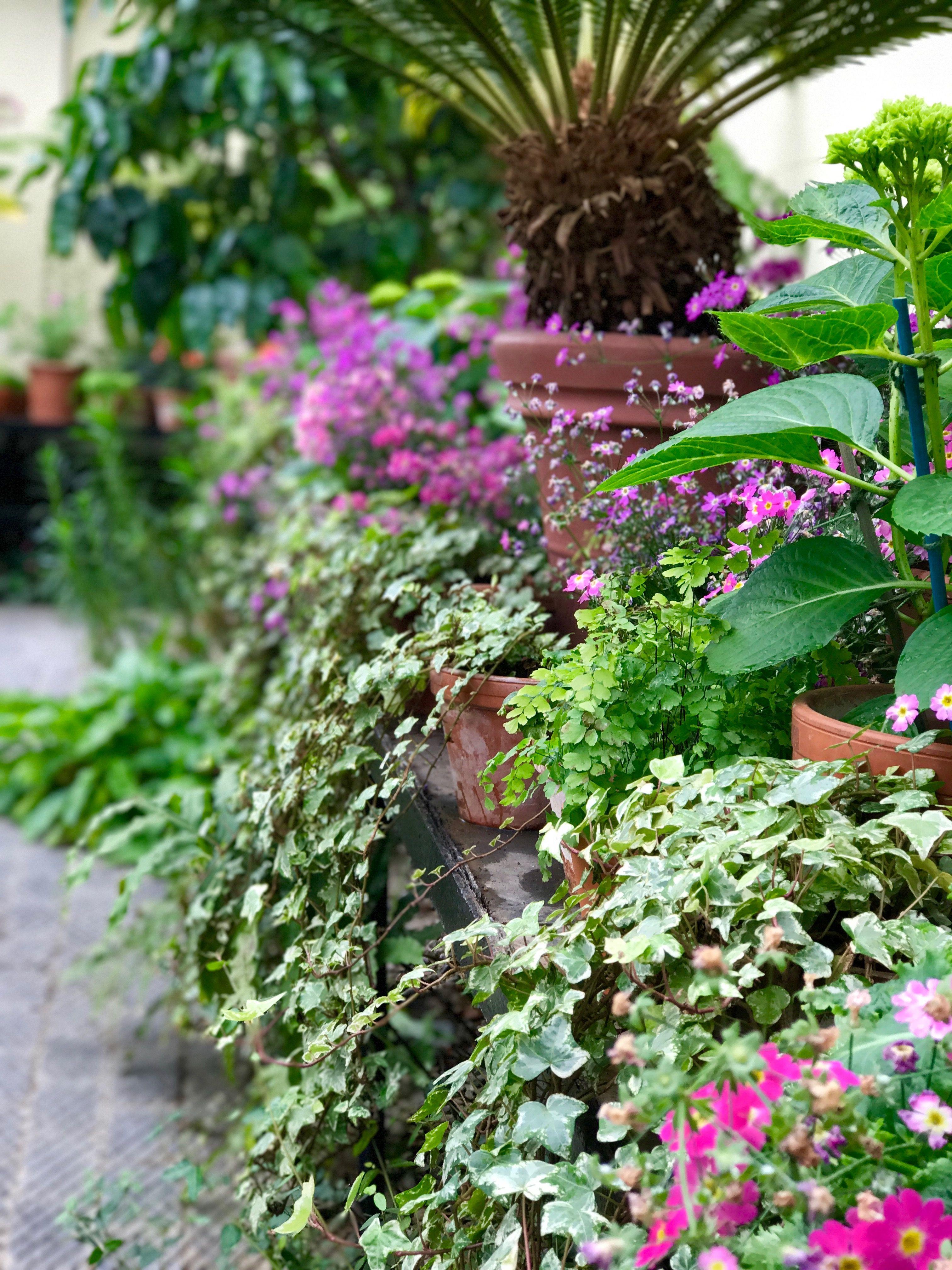 Jolie Studio Ltd X Oxford Botanical Gardens | Botanical ...