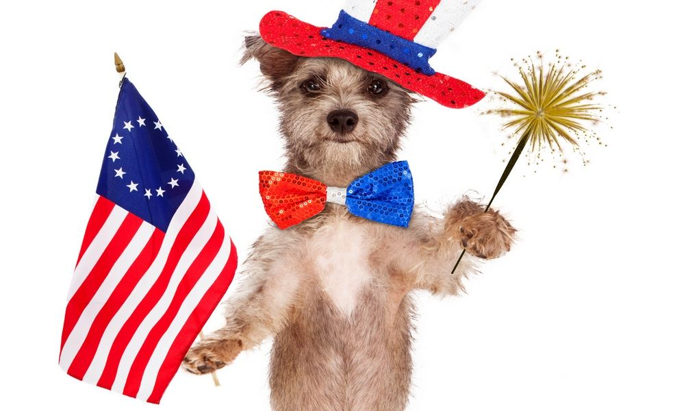4th of July Safety for Dogs How to Keep Your Pet Safe