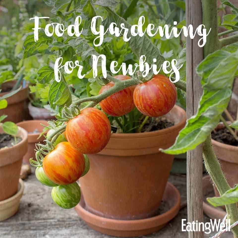Urban Vegetable Gardening For Beginners: Food Gardening For Beginners