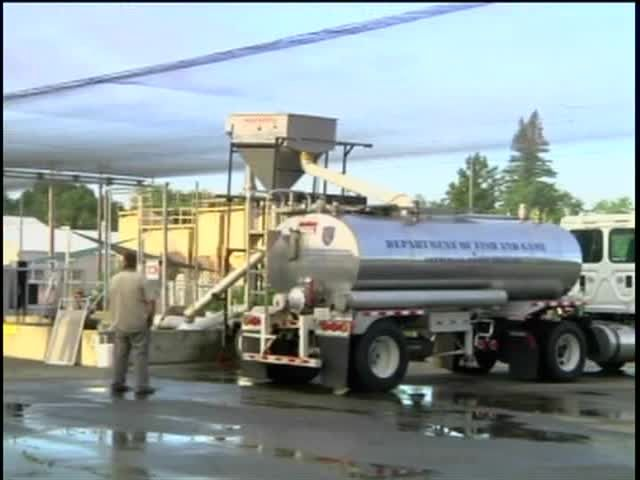 More salmon moved to ocean on trucks | Local News - Central Coast News KION/KCBA