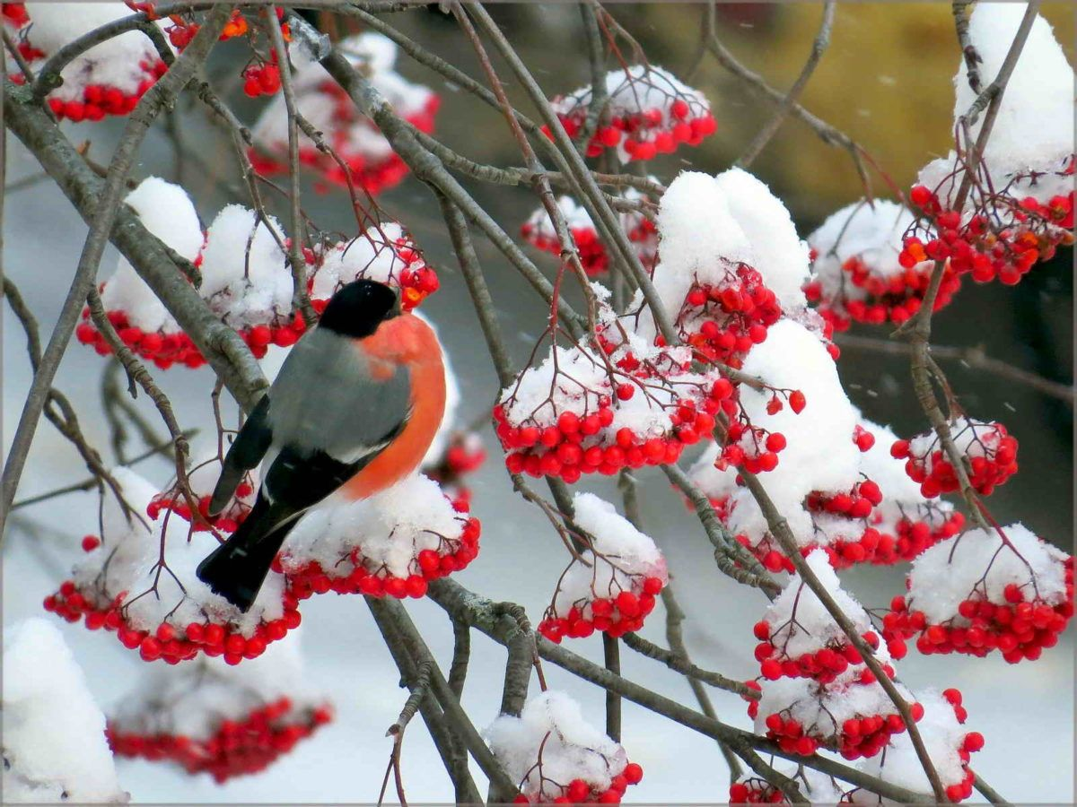 Волшебные сады как из сказки: 30 зимних фото | Домашние ...