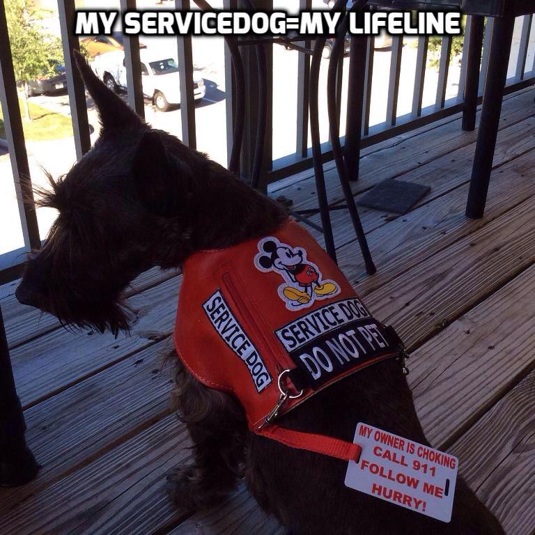 Pin on Jäger the service dog Scottie