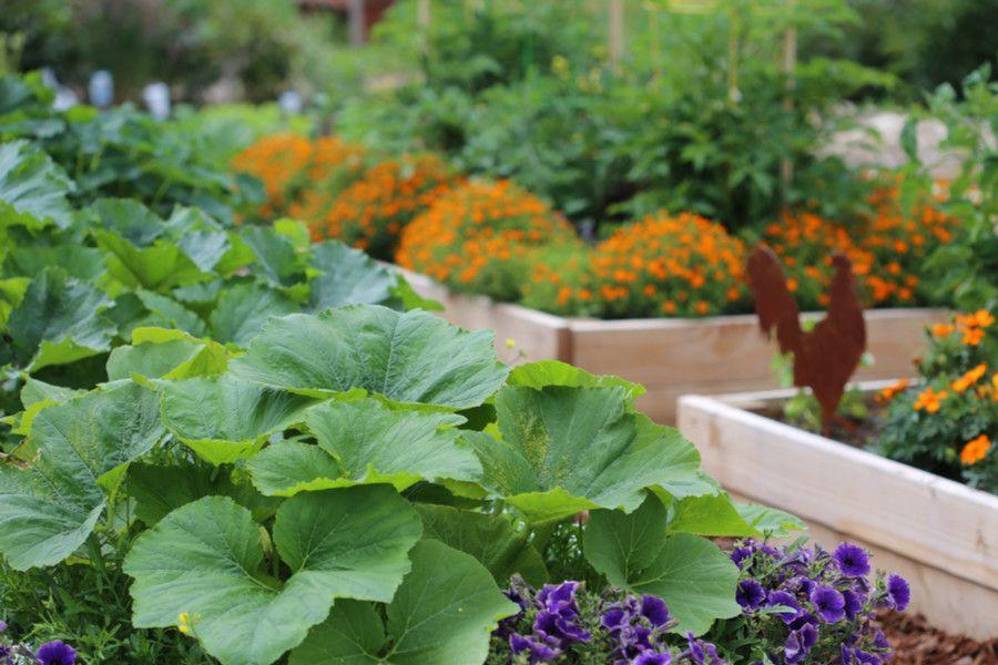 5 Secrets To Fertilizing Vegetable Plants And Flowers 400 x 300