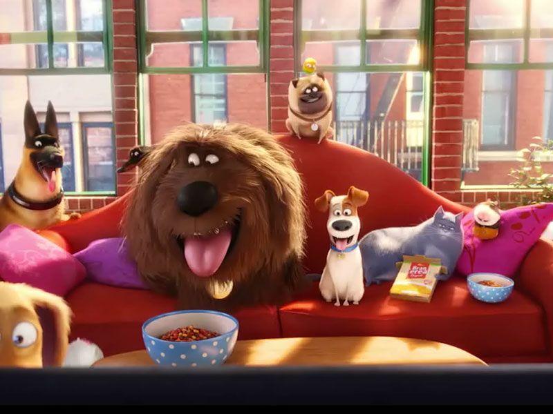 The Secret Life Of Pets People Review Secret Life Of Pets Pet