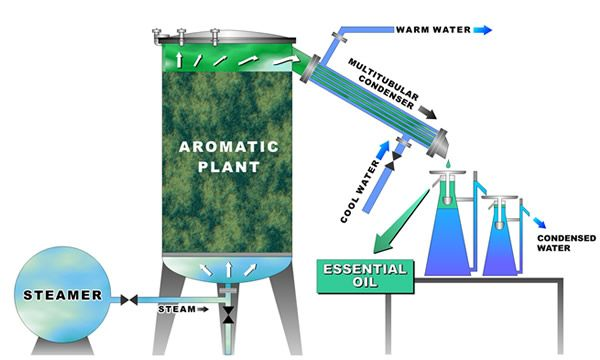 Image result for steam distillation apparatus for essential oils