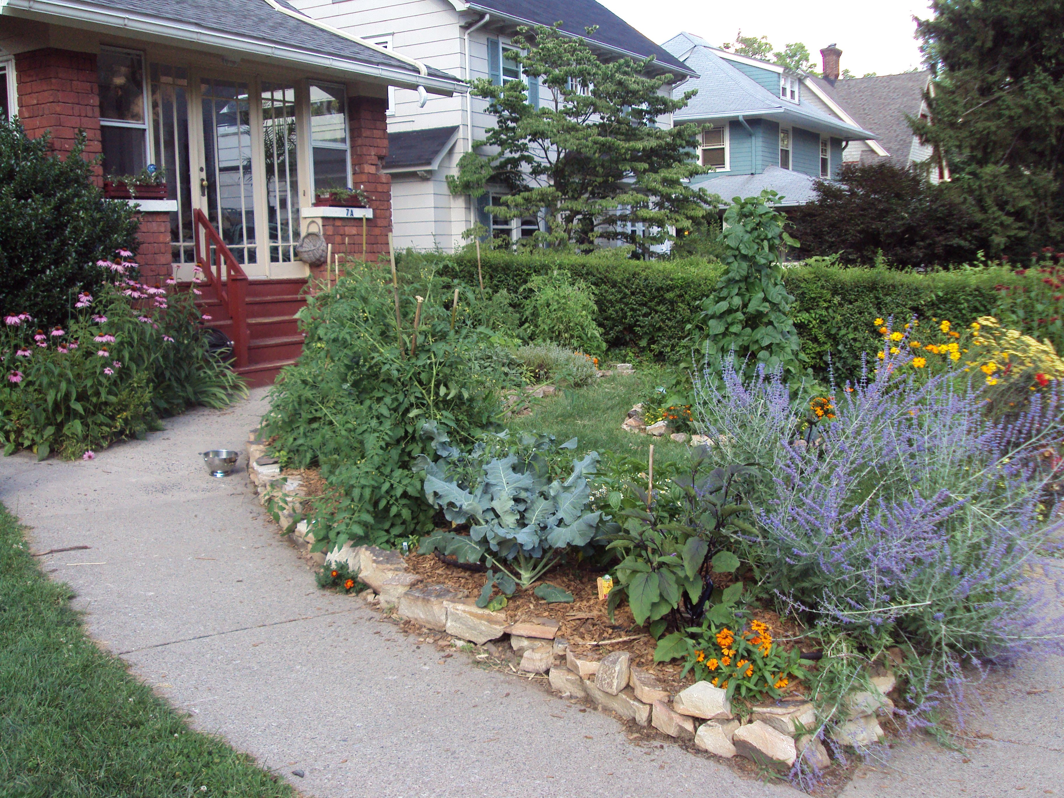 Last Year I Added Several Herbs To My Front Yard Gardens