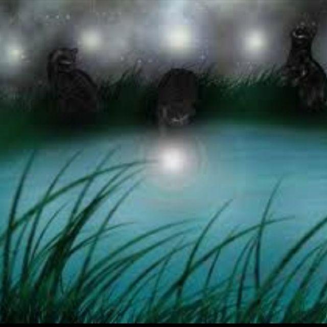 warrior cats lake territory