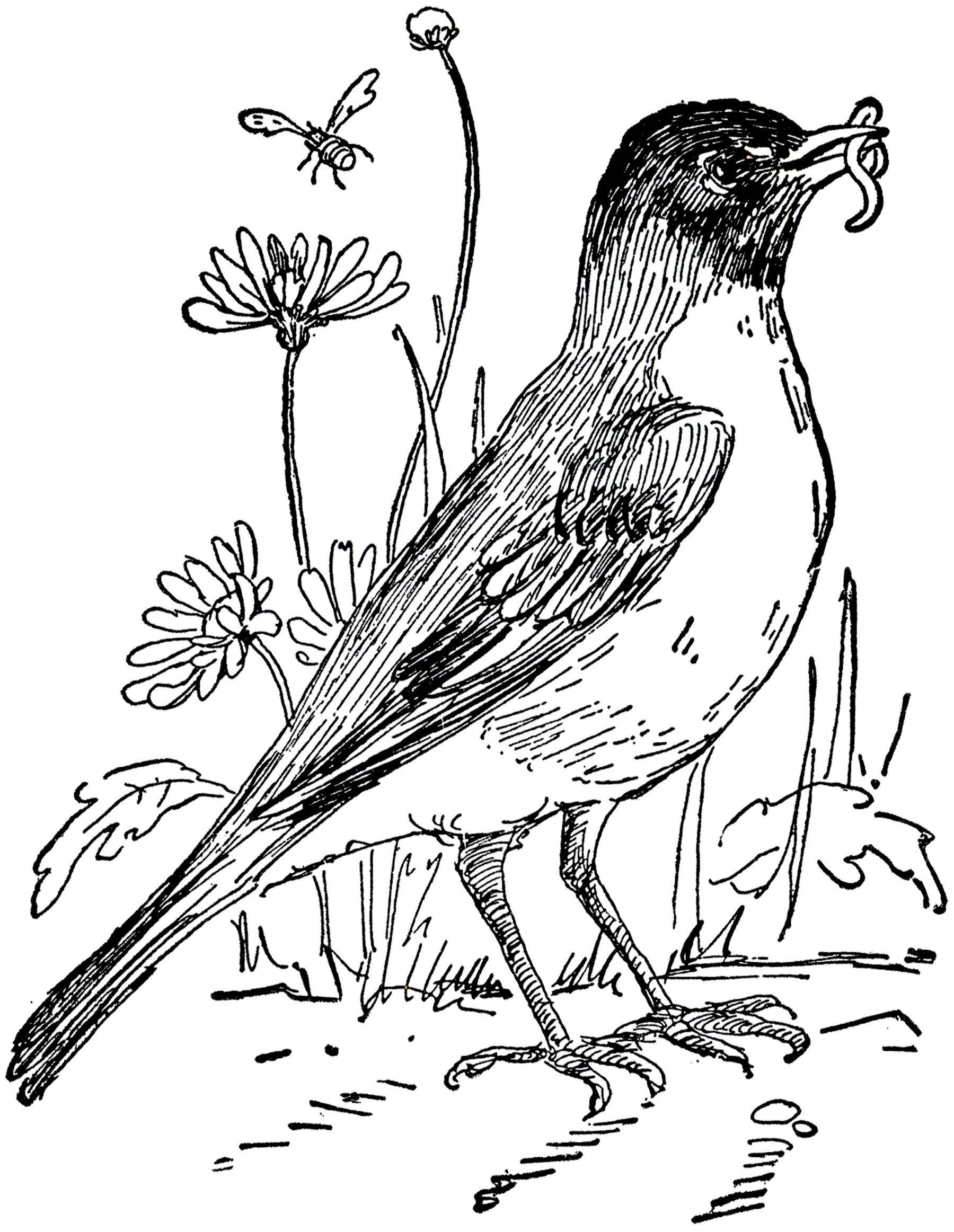 Red Robin Coloring Pages Free Robin Cliparts Download Free Clip Art Free Clip Art In 2020 Robin Drawing Coloring Pages Flower Drawing