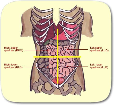 Four Quadrants Of The Abdominal Area Anatomy Physiology
