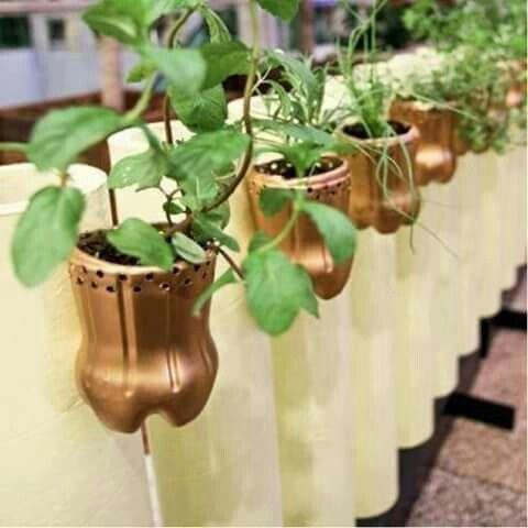 plantas horizontal   manualidades - creatividad   pinterest