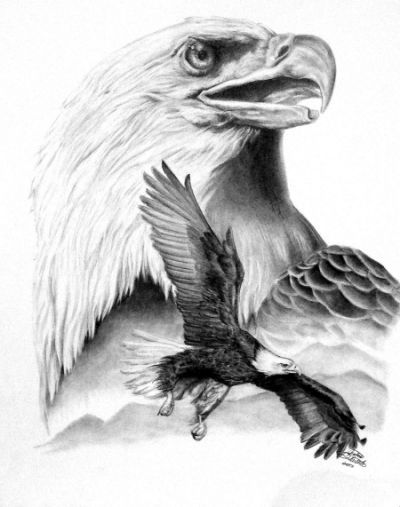 Bald Eagle Drawing Flying Eagle Mit Bildern Zeichnungen Tiere
