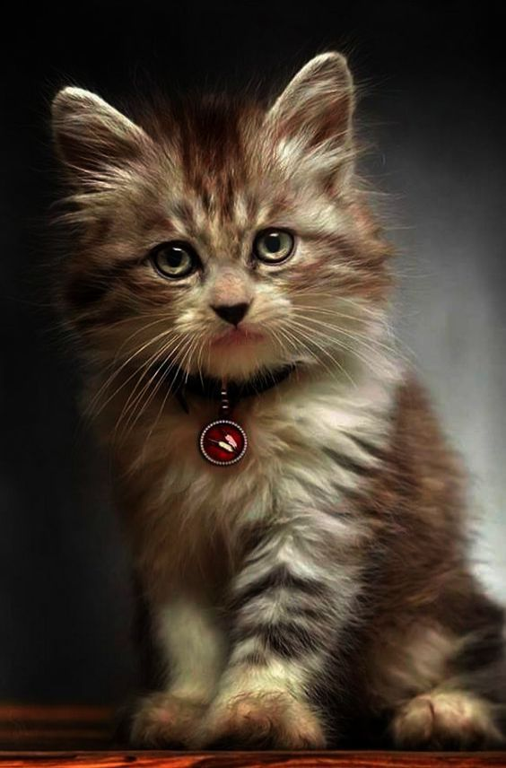 Cats And Kittens Gumtree Ni Half Cute Baby Animals Playing Videos Of Easy To Draw Cute Animals Behind Mother Cat Biting A Chat Mignon Bebe Chat Chats Adorables