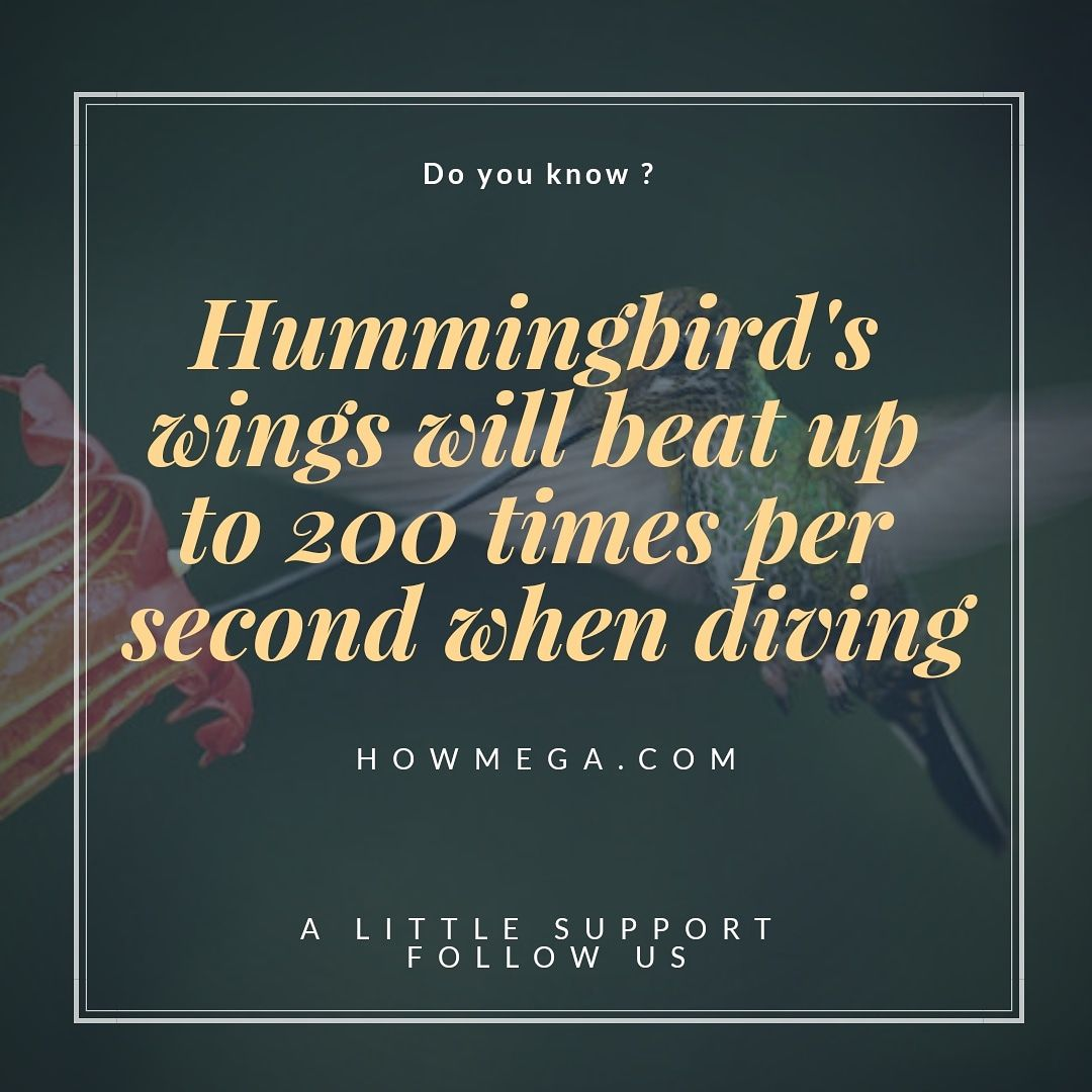 Do you know ? Hummingbird's wings will beat up to 200