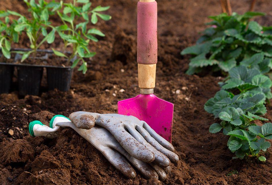 Que Planter Au Mois De Mars Jardinage Mars Jardinage Potager