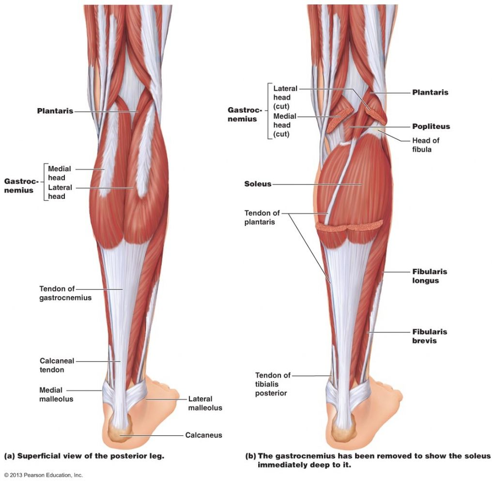 knee and leg anatomy tag muscle pain back of leg above Types of Foot Pain Diagram Top of Foot Pain Diagram