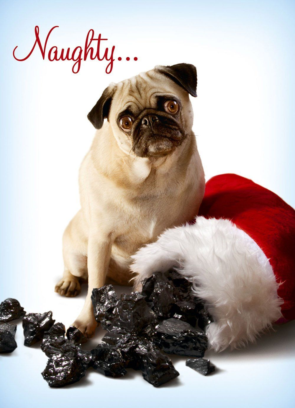 Avanti Christmas Cards, Naughty Pug | For the Crazy Mutts ...