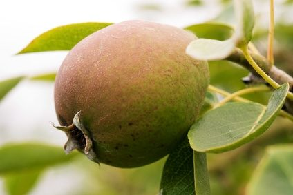 How To Plant Dwarf Fruit Trees In Michigan