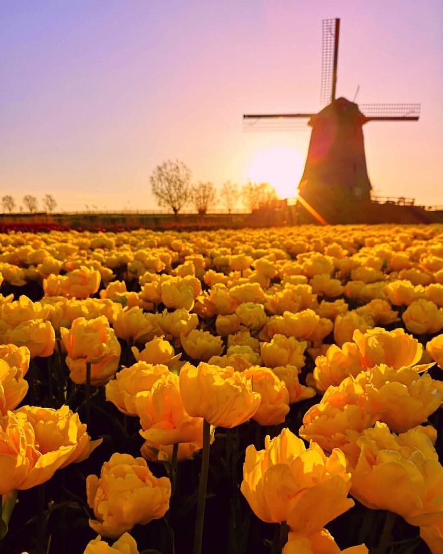 Pinktulips Fantastic Flower Photography By Dirk Jan Piersma Flowers Photography Landscape Photography Flowers