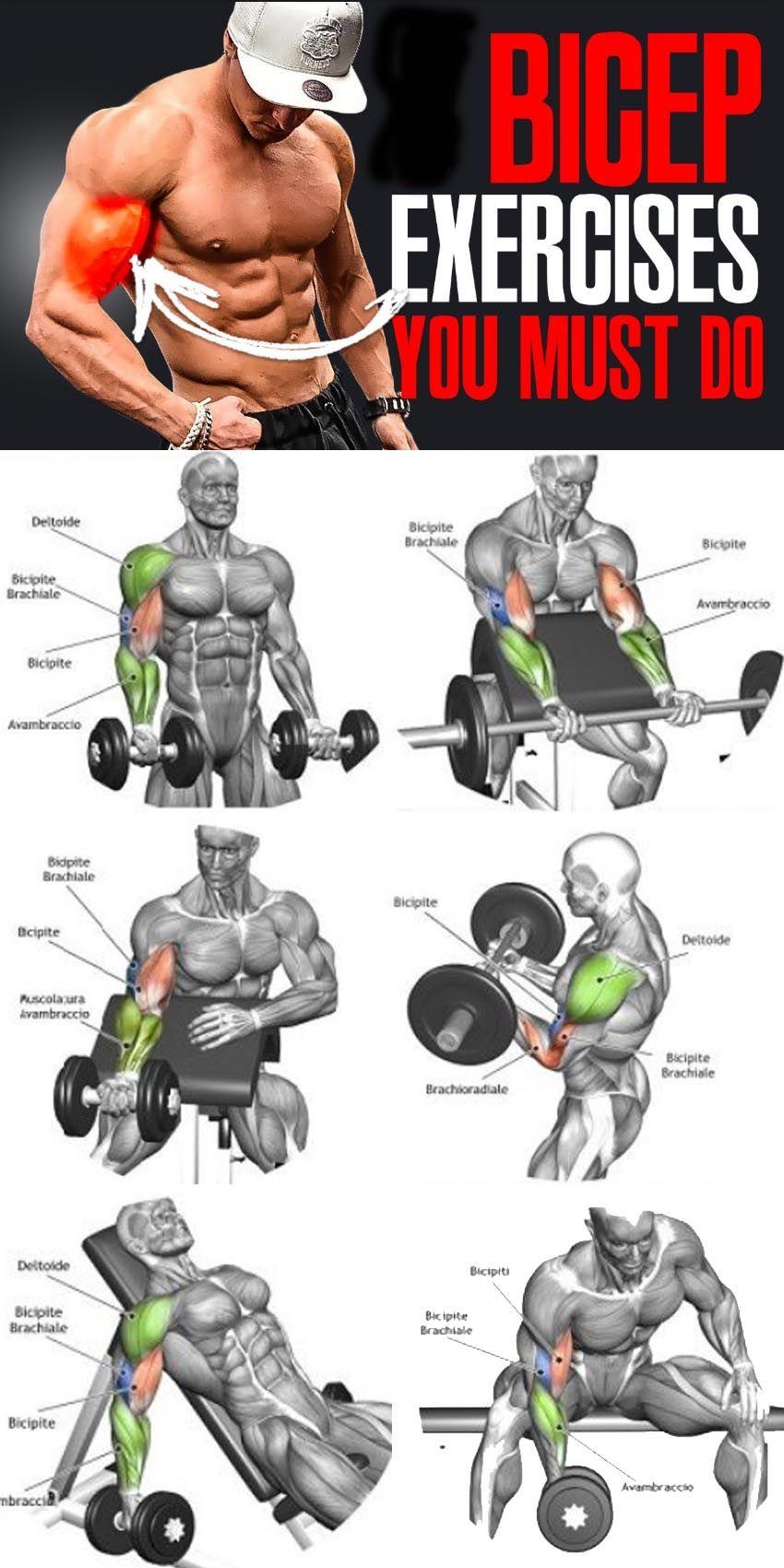 ejercicios pesas biceps