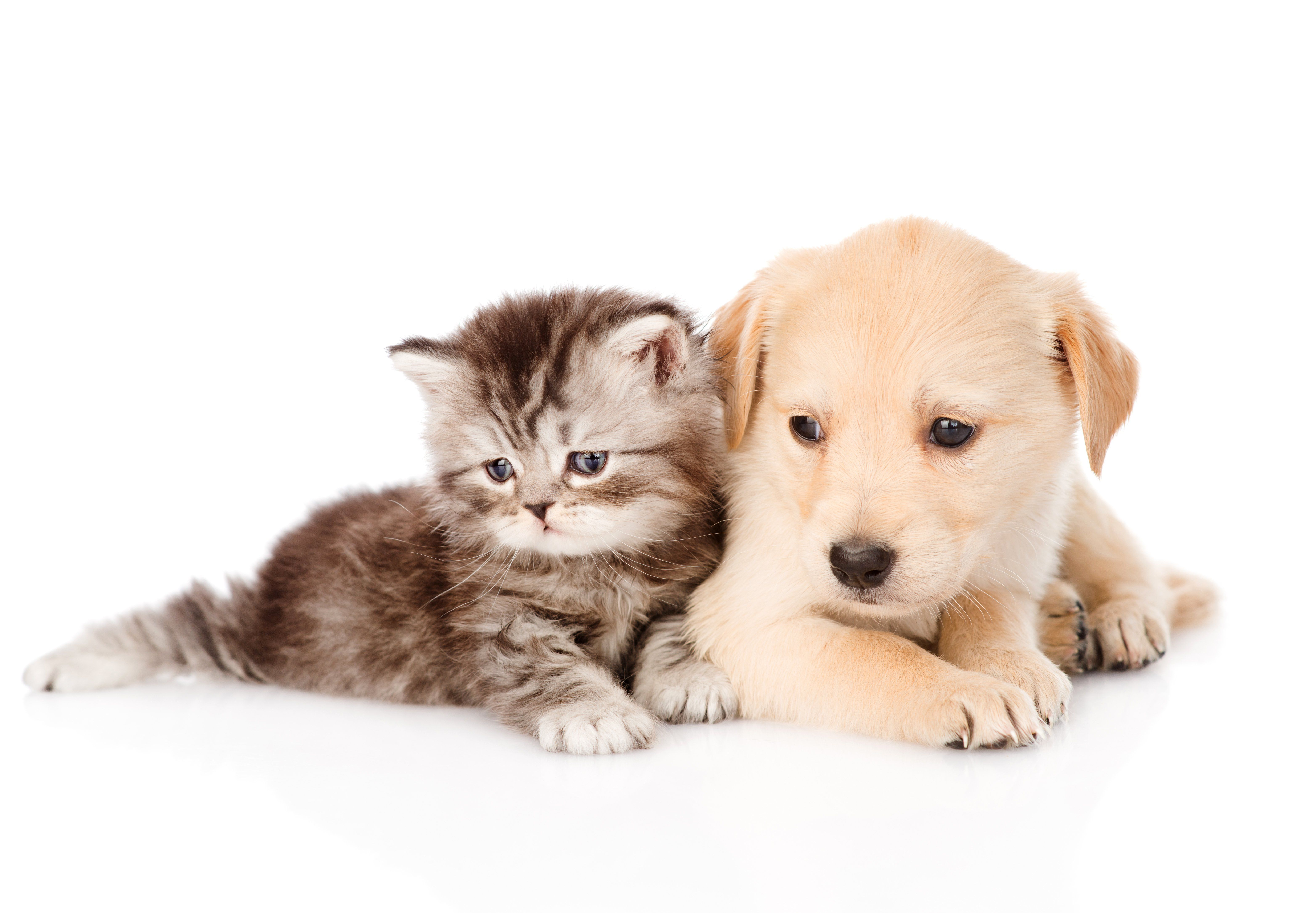 Dog And Cat Wallpaper Download Cute Cats And Dogs Kittens Cutest Kittens And Puppies