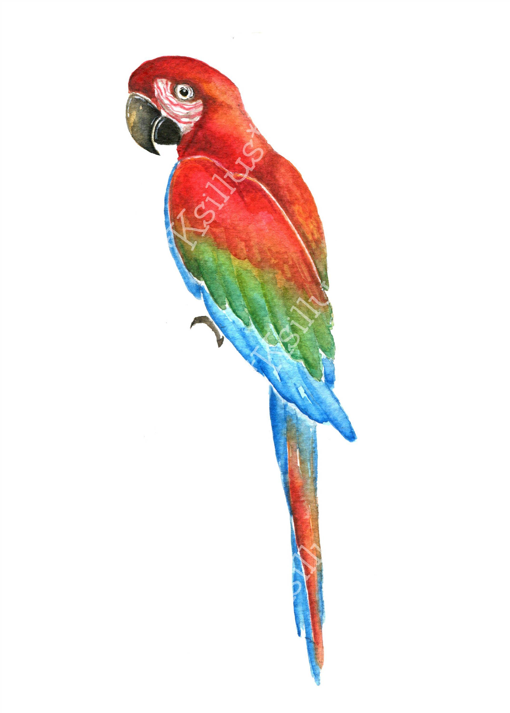 Birds parrot. Parrots clipart tropical pattern