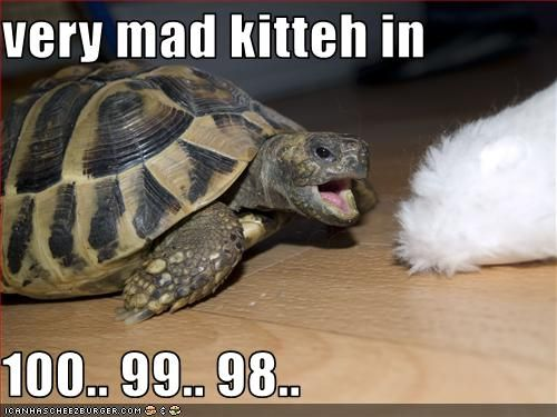 61587f745123b180b4e9b303c8bd71ee cats funny turtle memes funny pinterest funny turtle, memes