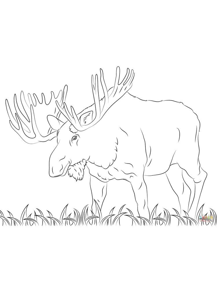 Free Coloring Book Pages Moose Animal Coloring Pages Coloring Books Free Coloring