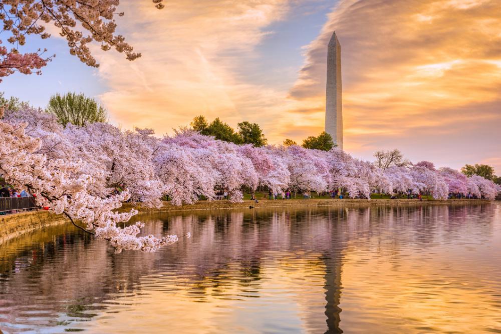Valerie Winebrenner Vice President Associate Broker Buyer S Edge National Parks Cherry Blossom Season Cherry Blossom Festival