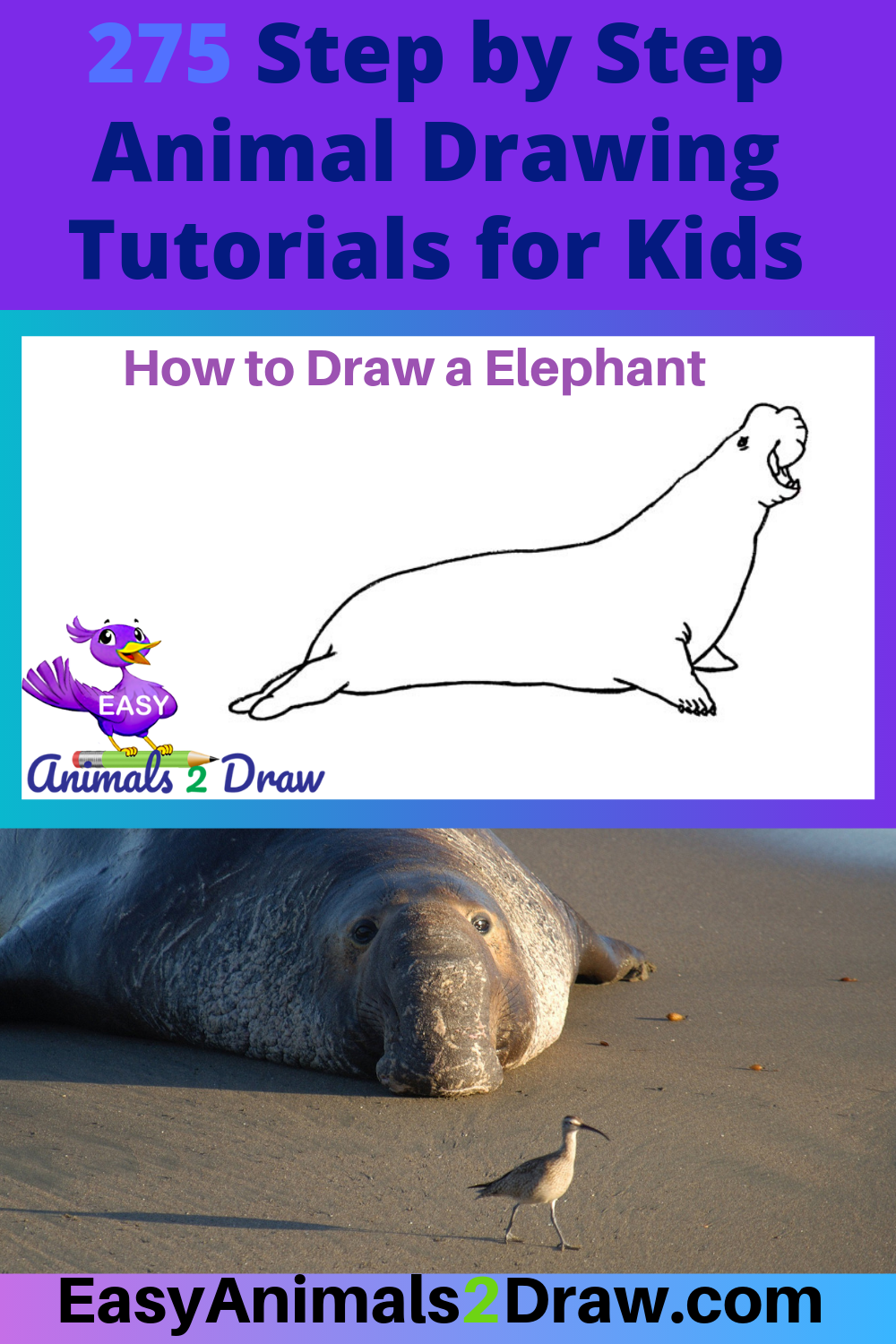 How To Draw An Elephant Seal Step By Step Avec Images