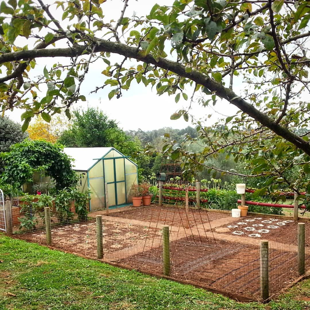 Our Paradise vegetablegarden growwhatyoueat eatwhatyougrow